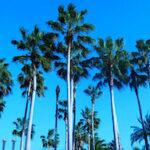 Orlando Florida's Smoke & Mirror Tourist Scam: Hypocrites In A Cardboard Paradise