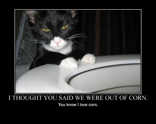 Corn Cat