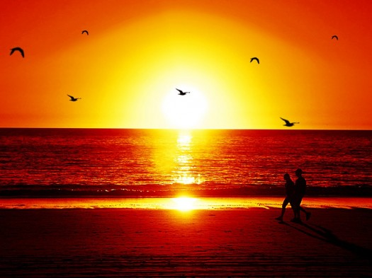 flying-birds-beach-sunset