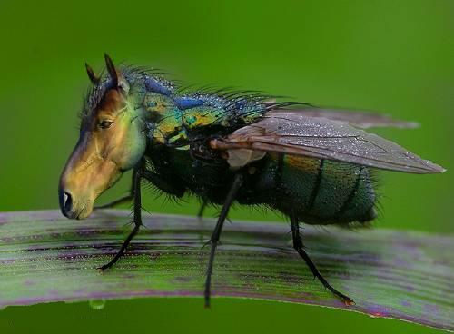 Horsefly Google