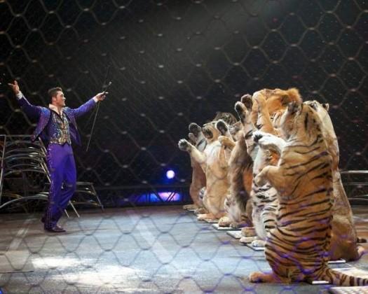 Lions Sharpton