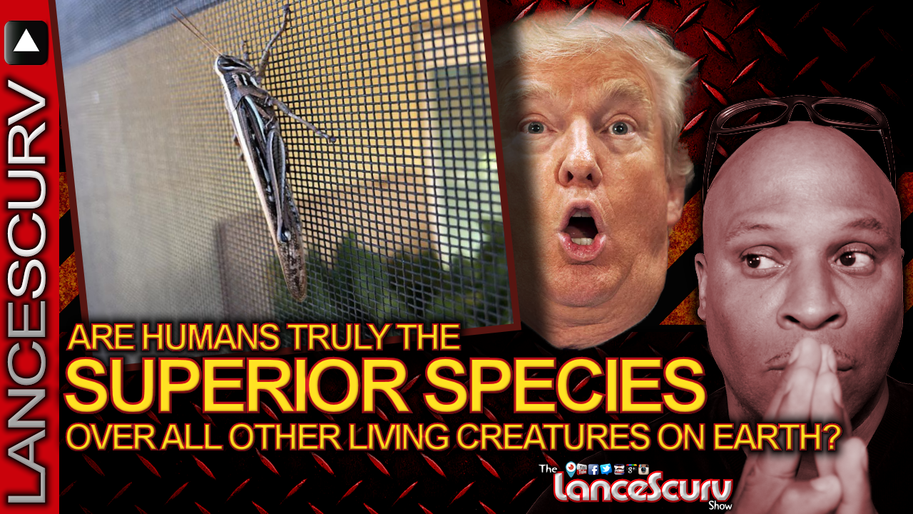 Are Humans Truly The Superior Species Over All Other Living Creatures On Earth? - LanceScurv