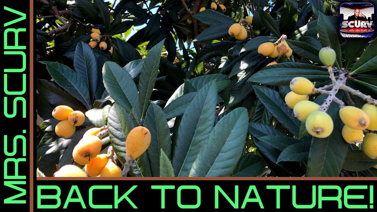 GOING BACK TO NATURE IS THE ONLY WAY FOR BLACK PEOPLE TO GET OUT THE MATRIX! - The LanceScurv Show