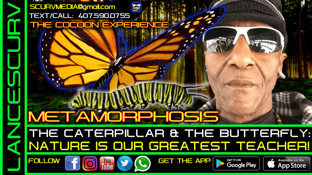 THE COCOON EXPERIENCE: THE CATERPILLAR & THE BUTTERFLY!