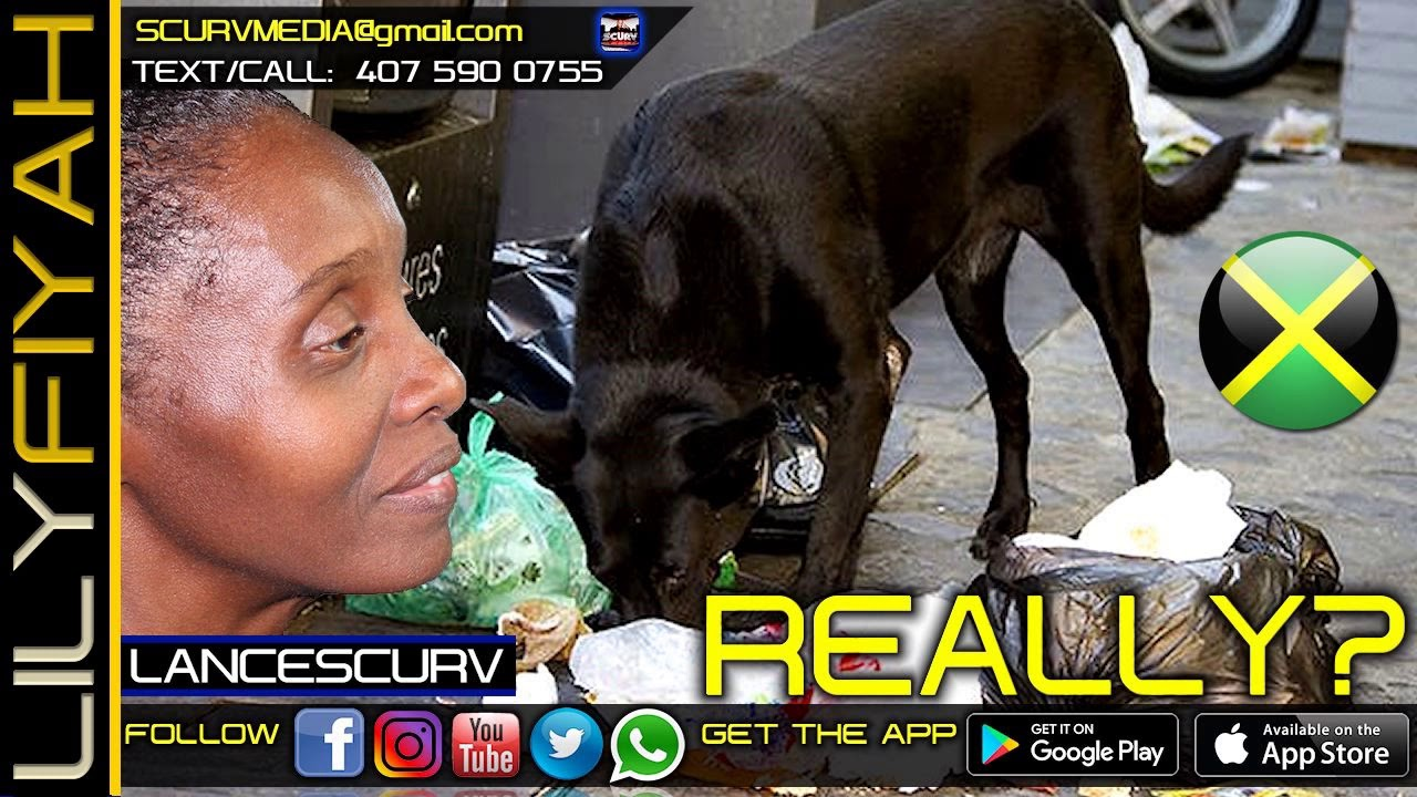 OH REALLY! JAMAICANS EAT OUT OF THE GARBAGE LIKE DOGS? - LILYFIYAH