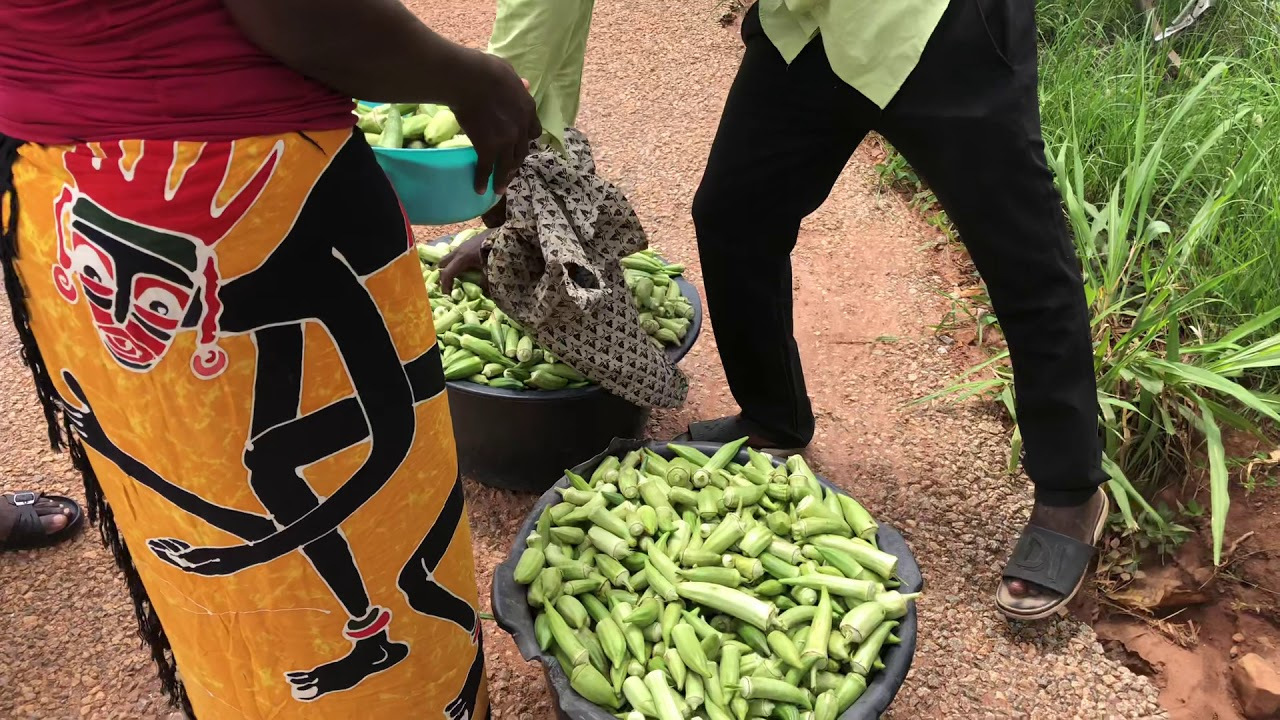 ROADSIDE OKRA SALE IN TEPA GHANA!