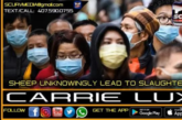 SHEEP UNKNOWINGLY LEAD TO SLAUGHTER? – CARRIE LUX